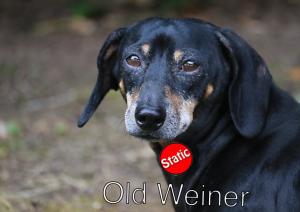 Old Weiner
